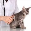 Ветеринарные клиники в Кодинске